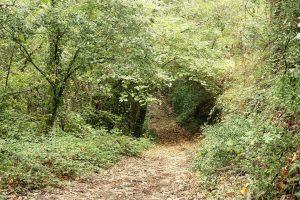 foto-70-IMG_5979-2-bosque fuente la teja-p