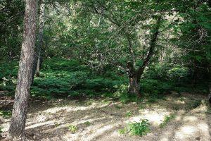 foto-90-IMG_9906-2-p-grandes-helechos-bosque-encant-1